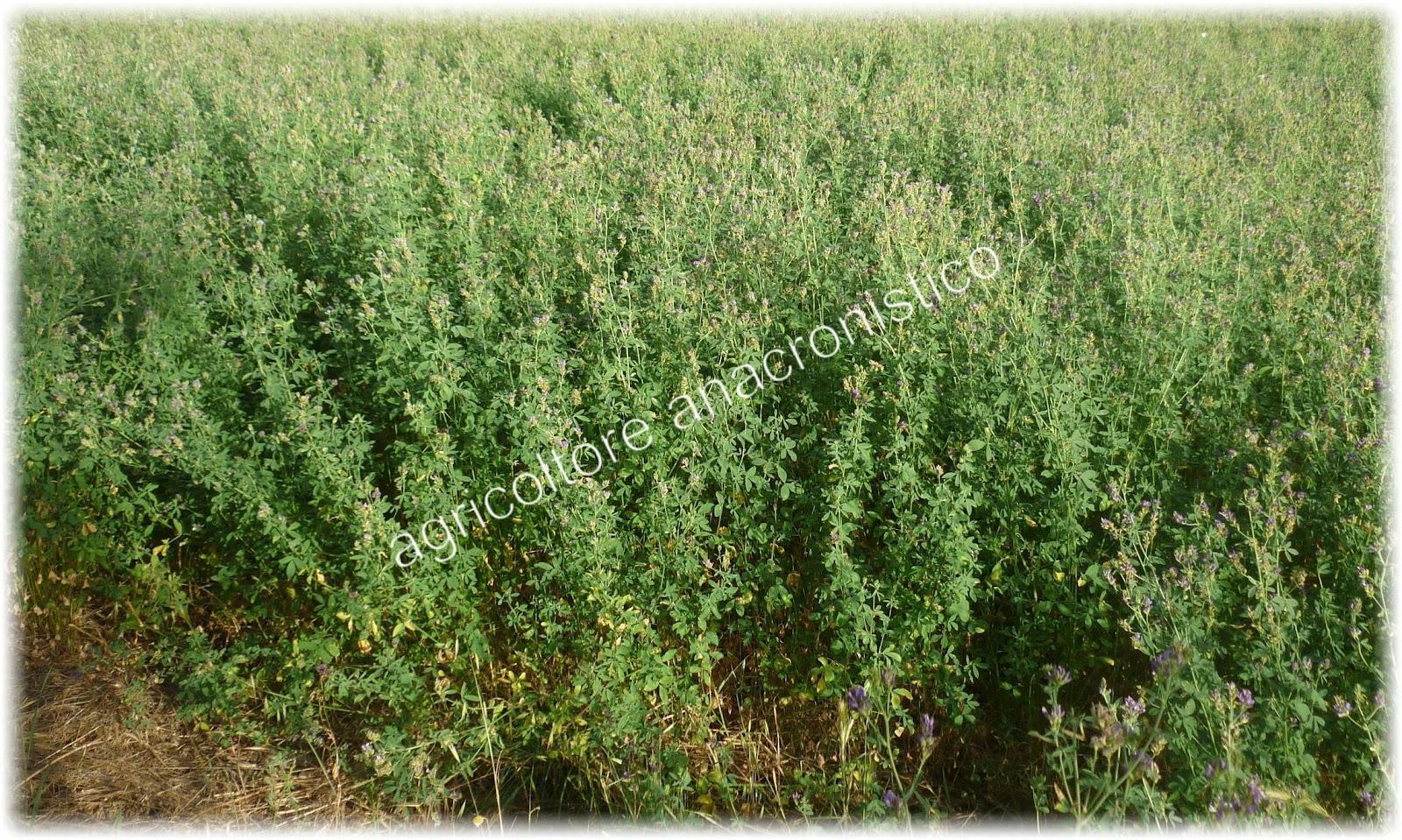 Pensieri di un agricoltore senza tempo giugno ed il fieno - Diversi tipi di erba ...