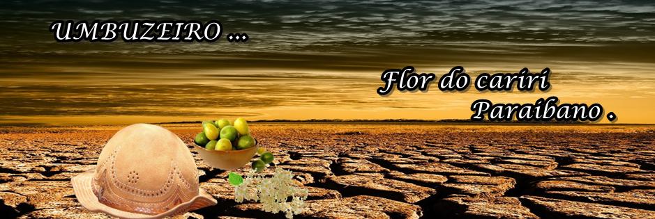 Blog Flor do Cariri