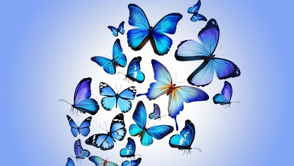 Butterfly Colorful Blue Drawing Art Images