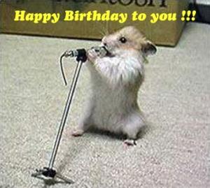 Funny and Wild Animals Funny Animals Birthday