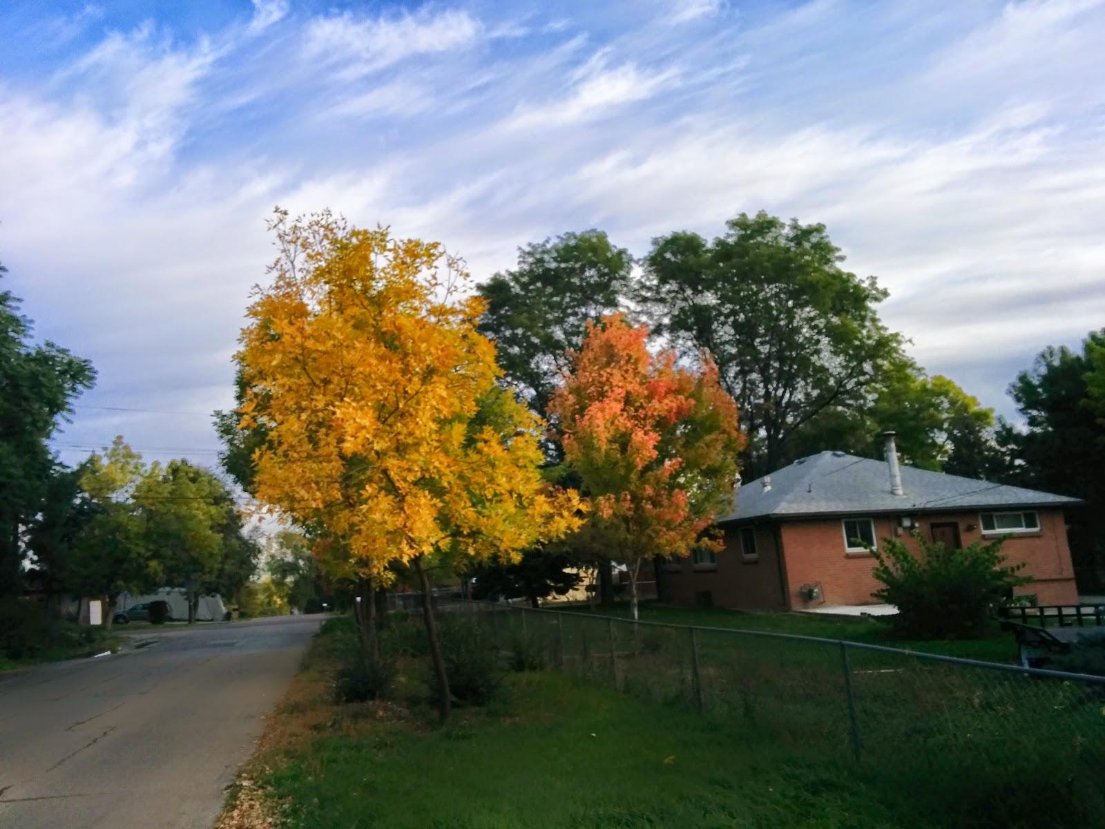 Fall trees neighborhood popular woman blog
