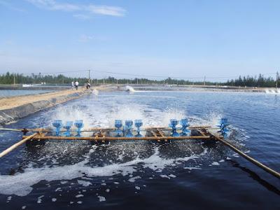 nuôi trồng thủy sản