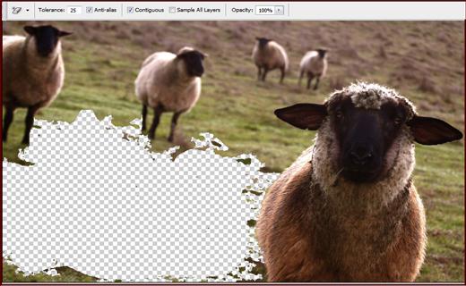 sihirli silgi özelliği , kuzu resimleri , profesyonel pixel silme aracı