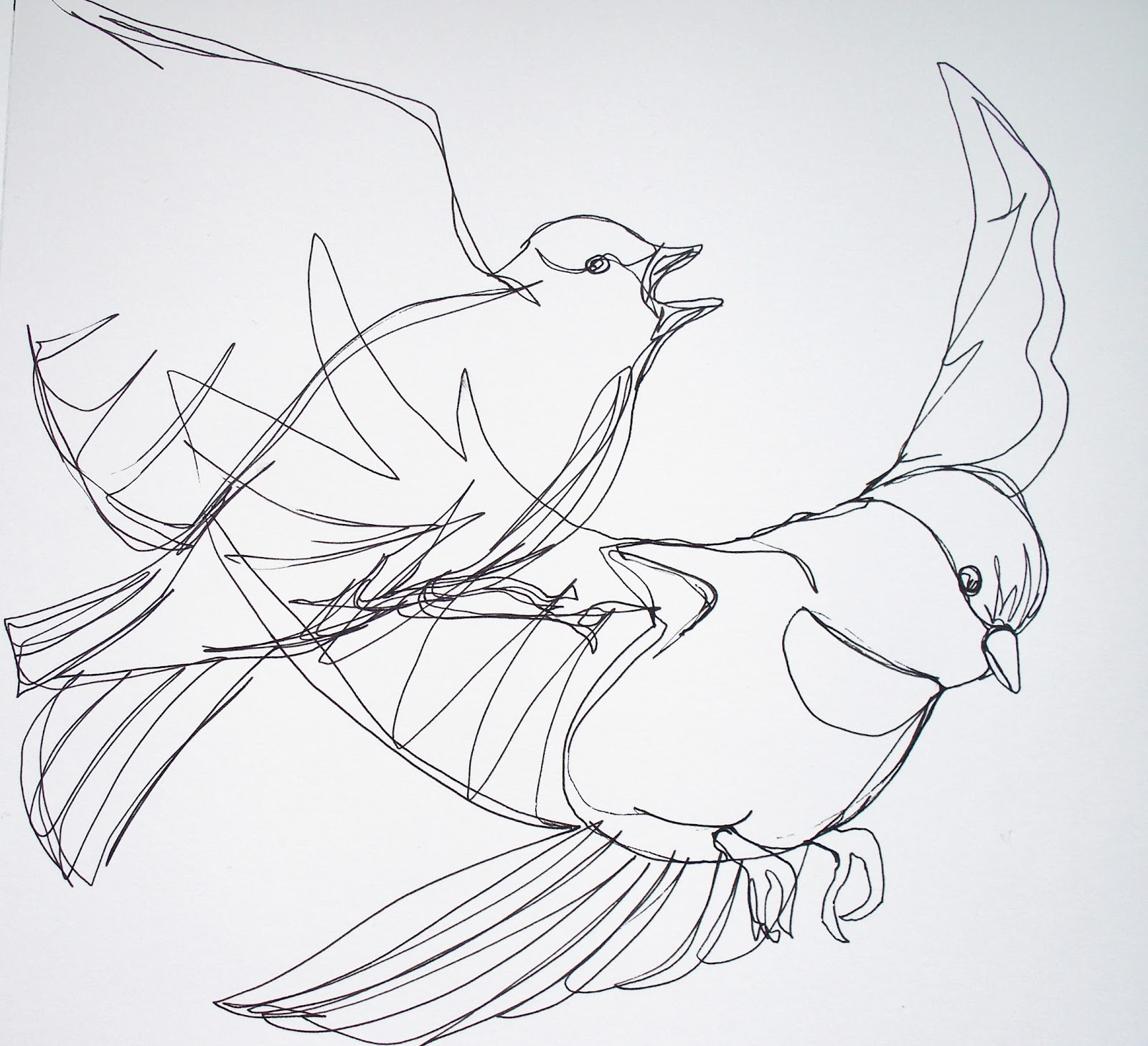 Continuous Line Drawing Of Animals : Birds line drawing