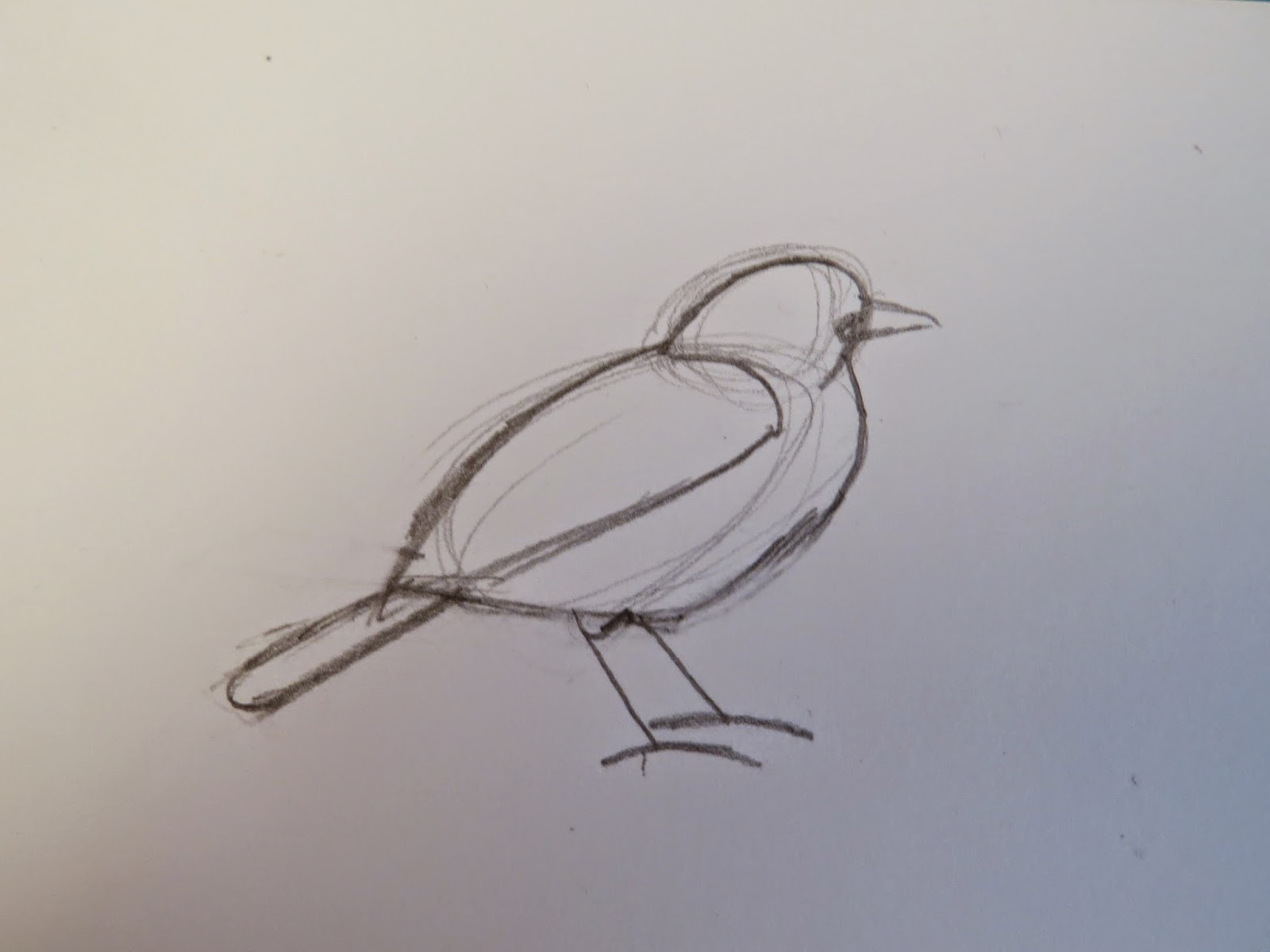 Line Art Of Birds : The autistic naturalist how to draw garden birds