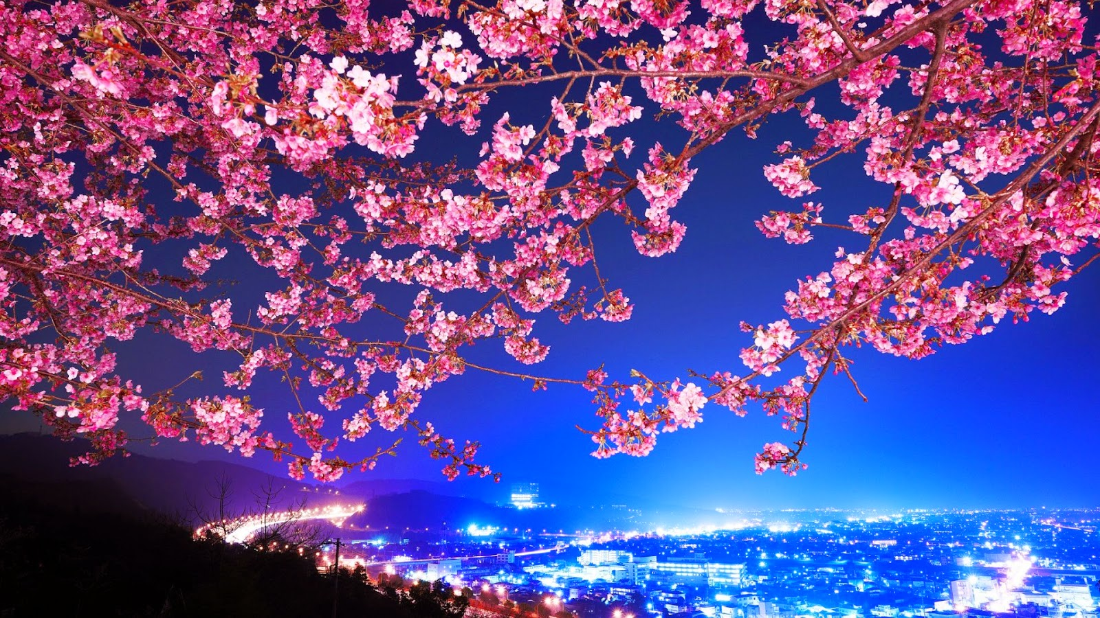 Mimura Sakura Trees Flowers For I Mac