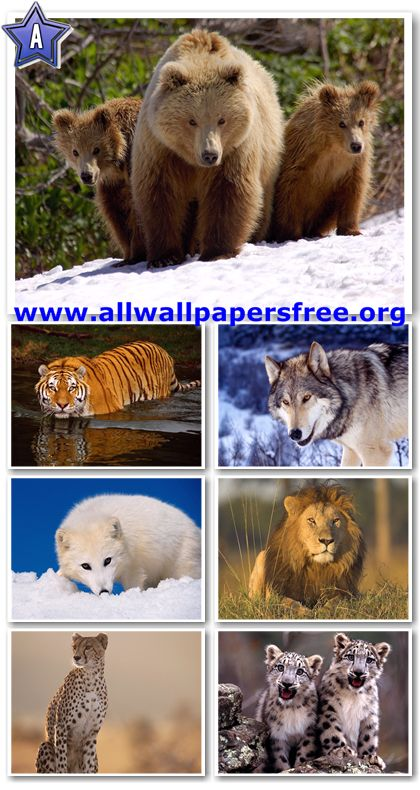 60 Amazing Wildlife Predators Wallpapers 1600 X 1200 [Set 1]