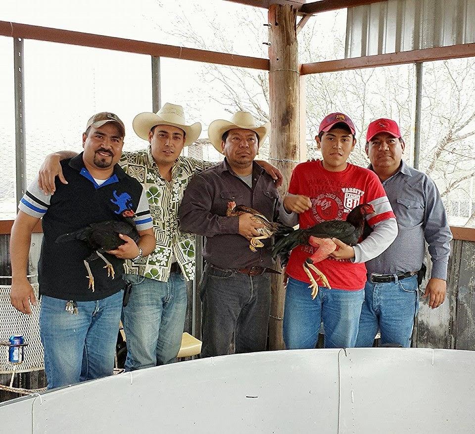 Entregando Trio Pie de Cria .Con Quinta La Ronchita N.Laredo Tamaulipas.