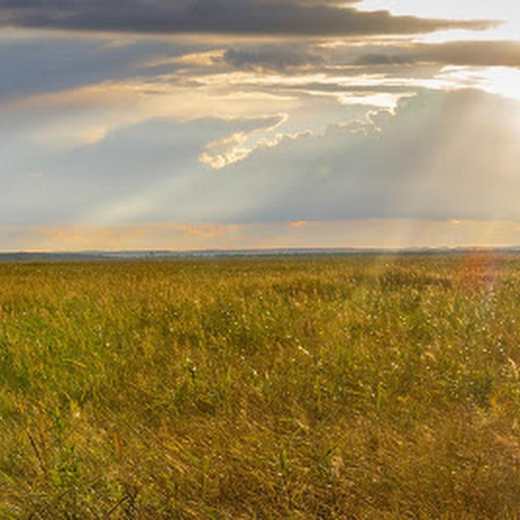 Łosiostrada i kładki - magiczne miejsca nad Biebrzą