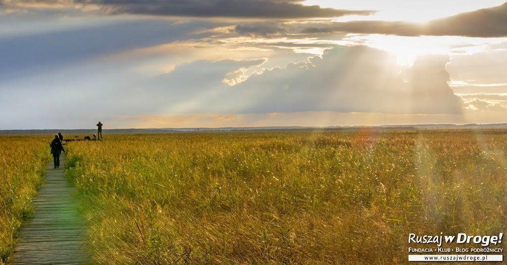 Długa Luka - piękna kładka widokowa w Biebrzańskim Parku Narodowym
