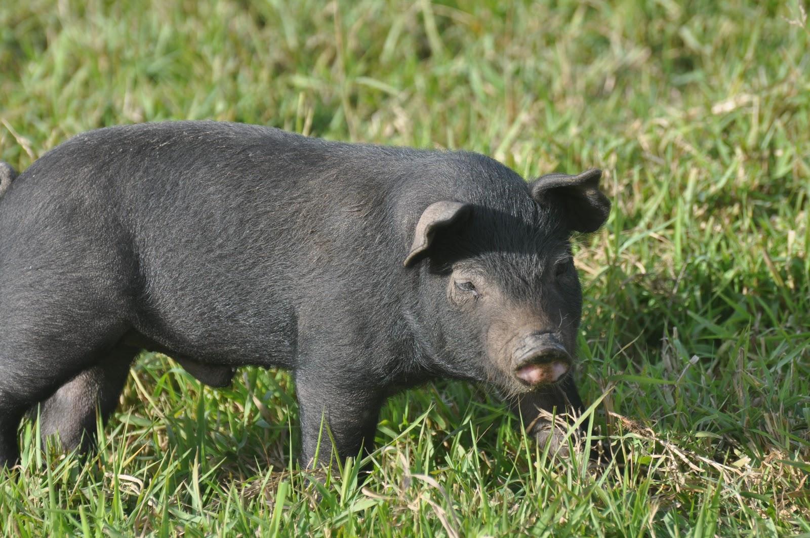 how to talk pig latin
