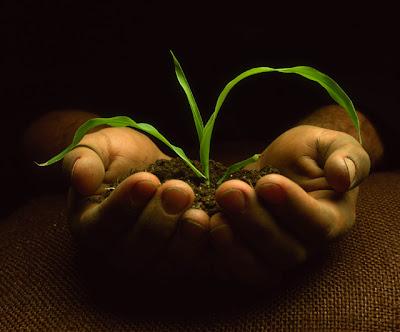 planta arbol+medio ambiente+ecologia