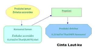 produktifitas tumbuhan lamun