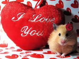 صورة جديدة عيد الحب