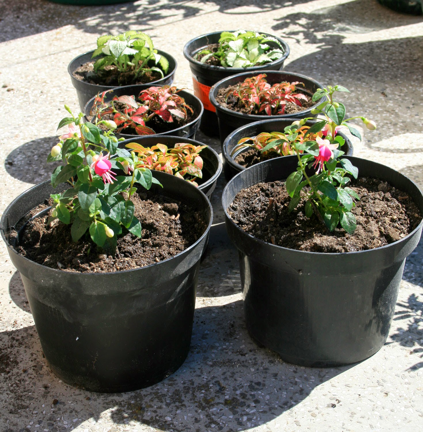 Potted up plants in the sun