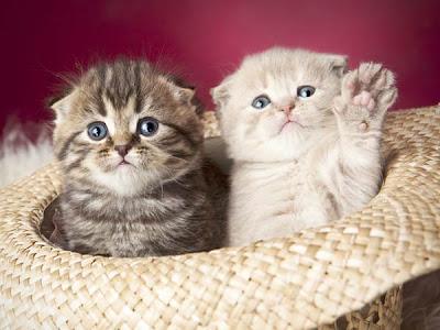 Tips Merawat Kucing
