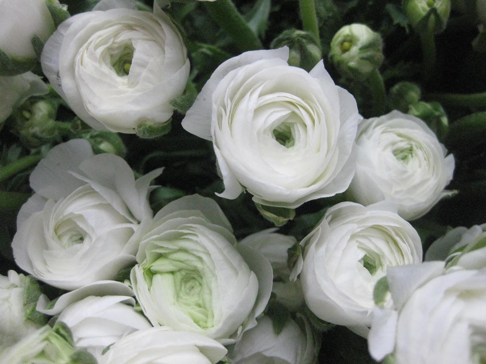 Helen Jane Floristry Favourite Flower for February Ranunculus