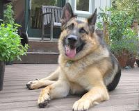 sillydog II