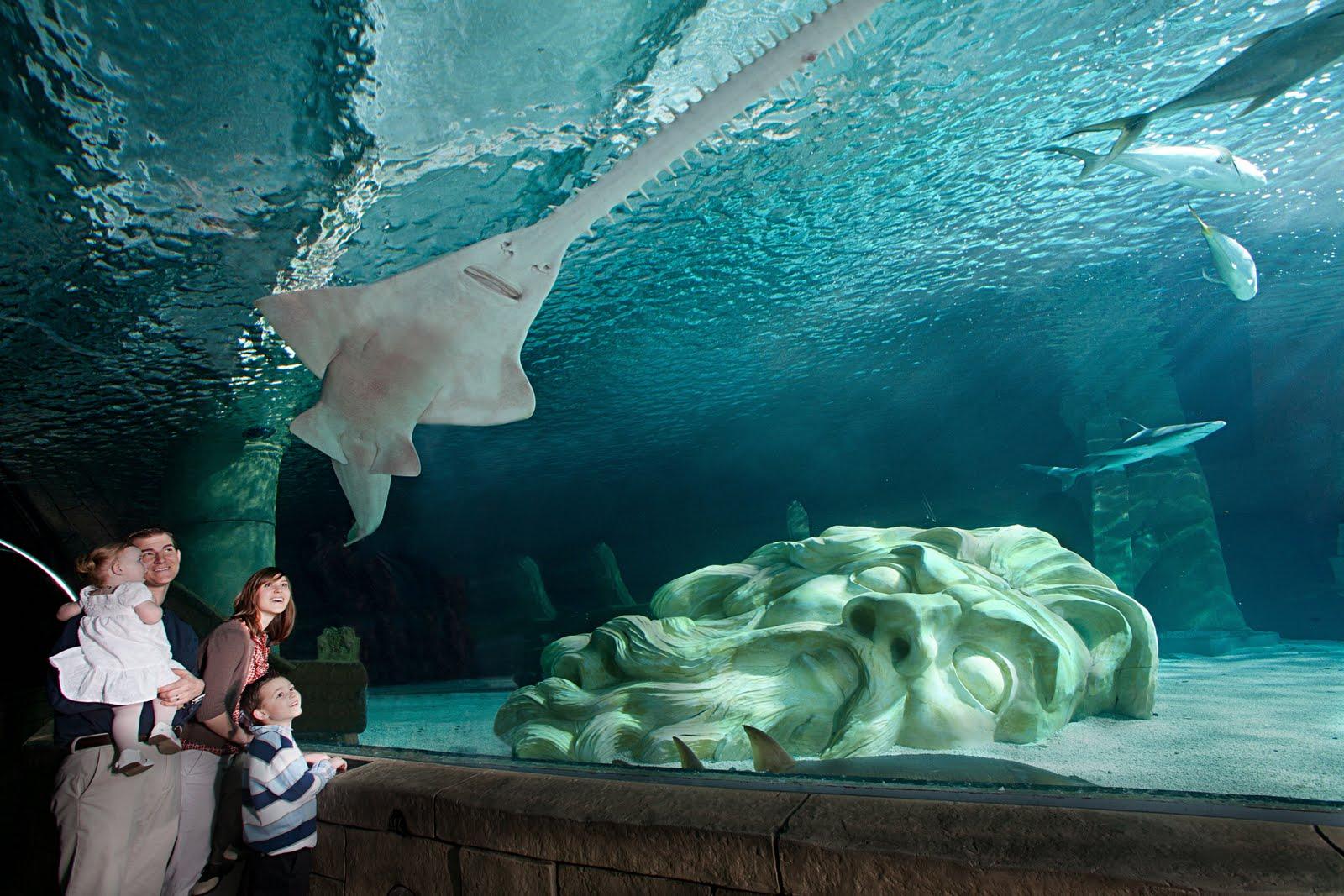 Image Result For Sea Life Minnesota Aquarium