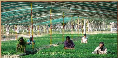 Assam PNRD Tax Collector Cum Road Maharer Recruitment 2014