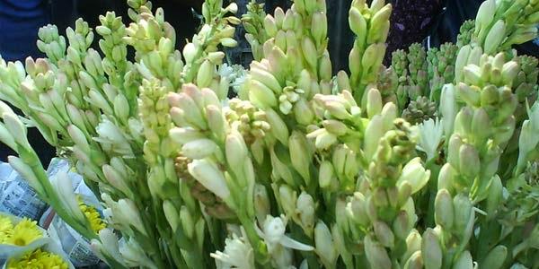 Bunga Sedap Malam Florist Bekasi
