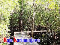 Tracking Mangrove Karimunjawa