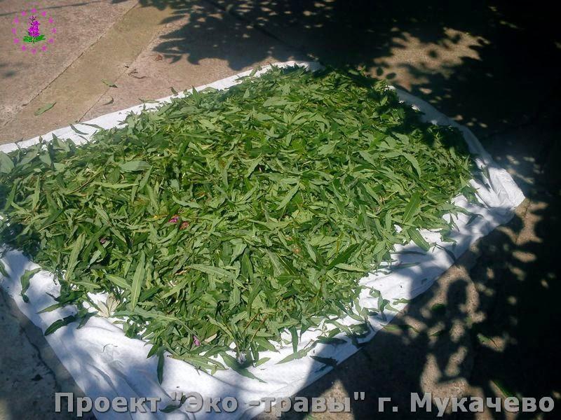 производство  и  изготовление чая