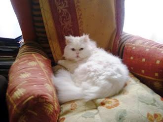 Liborio, mi gato Bori, se ha jubilado (tiene 15 años)