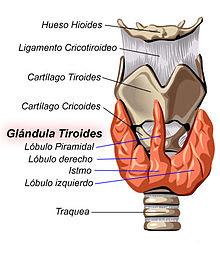 tiroides,hemocromatosis,T3,T4