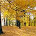 Yellow Autumn Trees photos