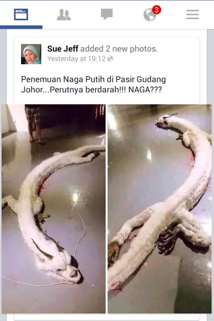 Naga Ditemui Di Johor?!