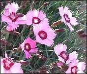 Late Spring Flowers Steelhead Park