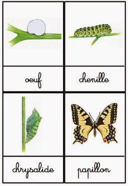 Crapouillotage cartes de nomenclatures le cycle de vie - Papillon maternelle ...