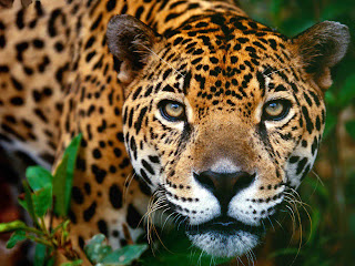 35 increíbles fotos de la fauna de la selva amazónica Parte 1