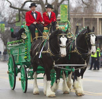 Frases De st-st patrick-saint patrick: Happy St Patick's Day In Chicago  Clydesdales