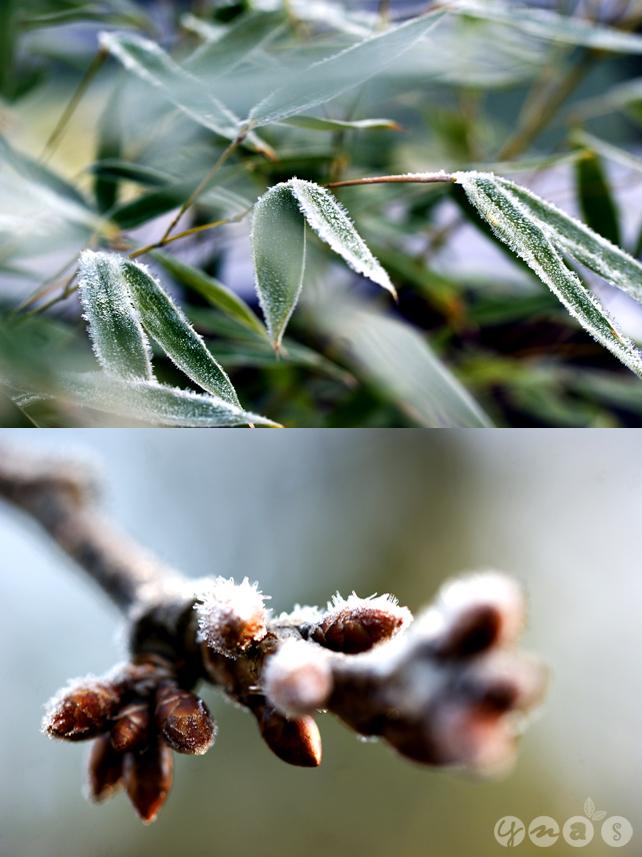 Naturfotografie, Makroaufnahmen, Frost
