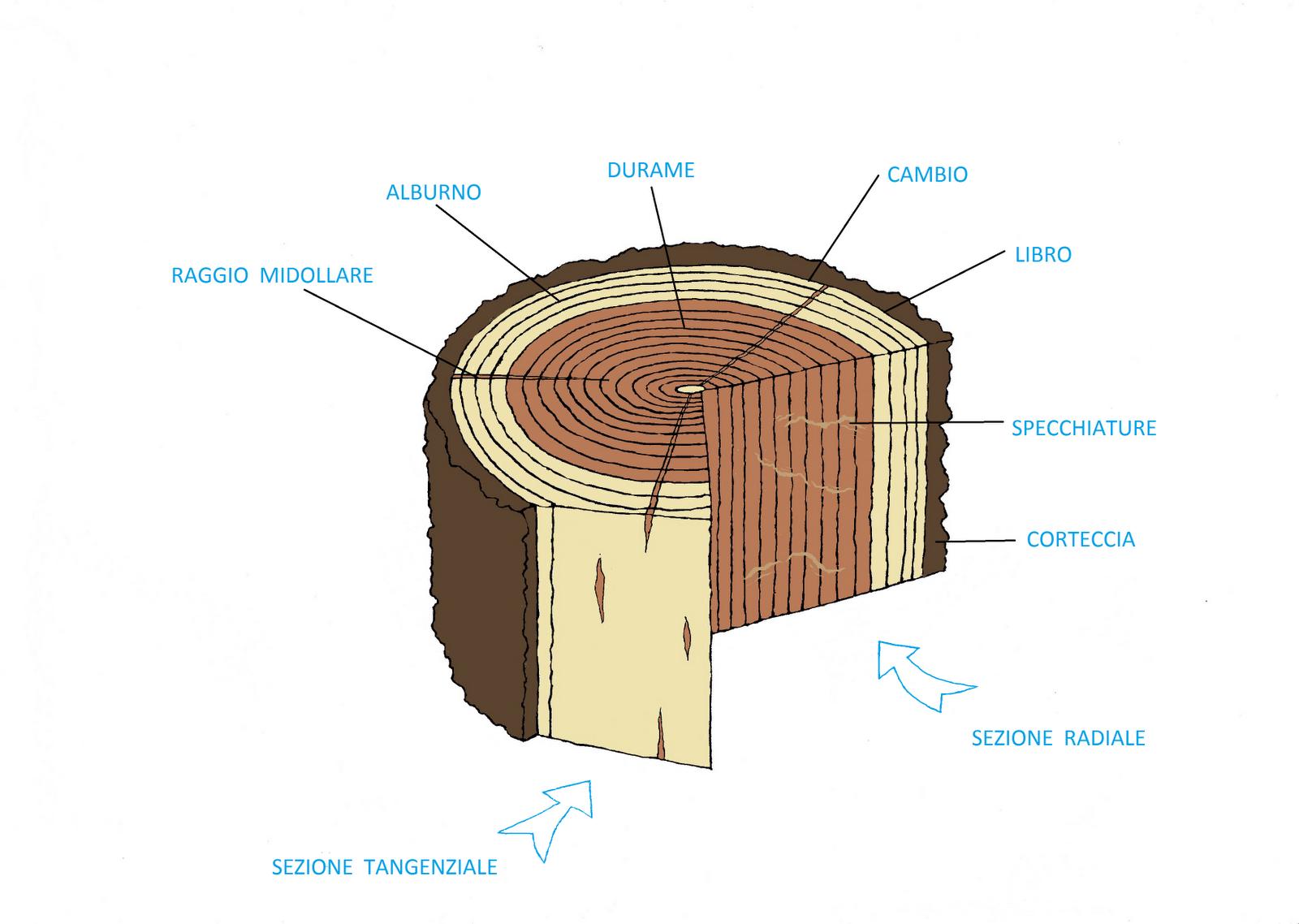 Amedeo liberatoscioli rovere for Tronco albero arredamento