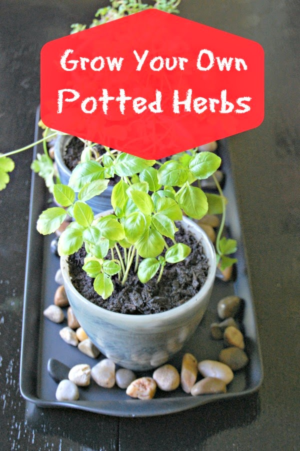 planting herbs, how to plant herbs, grow herbs