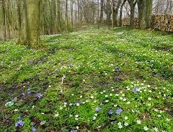 wiosna.w.lesie_