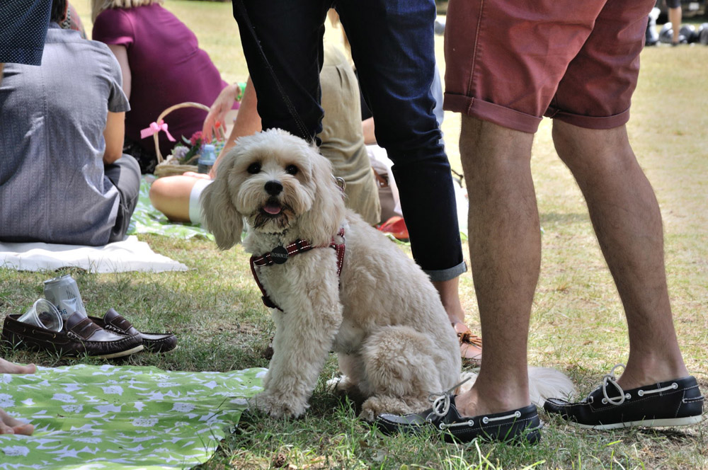 Pets IN The Park Gala Picnic. Unique Sydney Event Photography