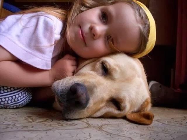 Good dog breeds for families dog breeds - Best dog breeds kids ...