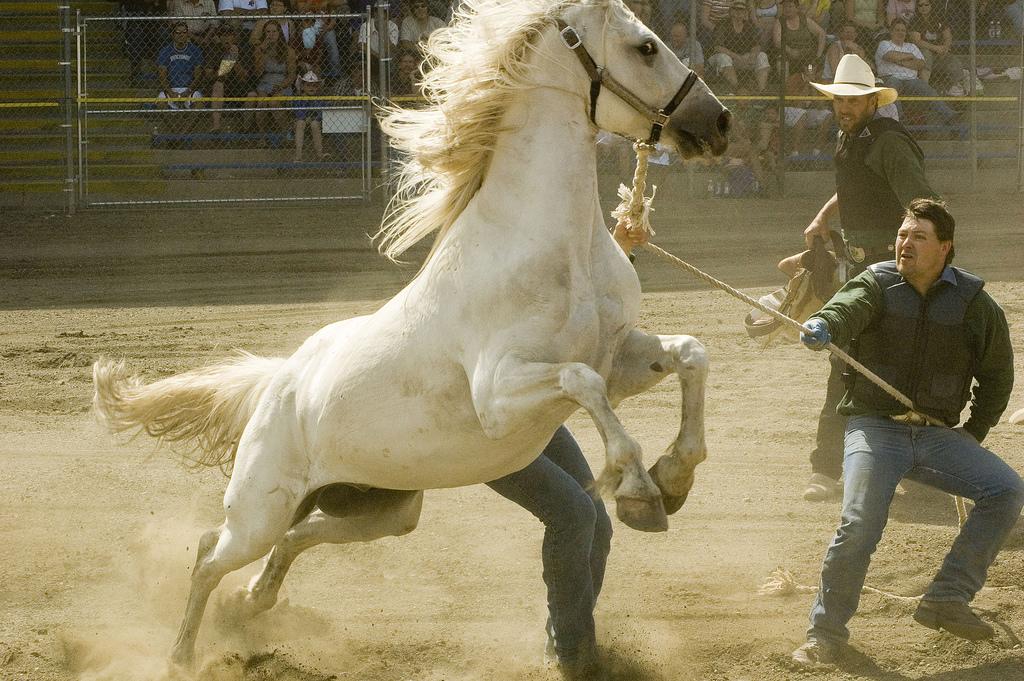 الحصان العربي الاصيل والحصان البربري msk-horses-18.jpg