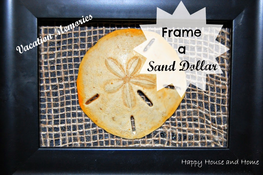 sand dollar, framed sand dollar, DIY wall art