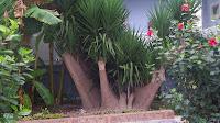 Palmen auf Kos