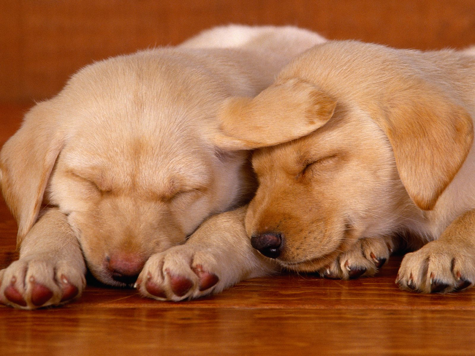 http://2.bp.blogspot.com/-8ZOe9NmZSUw/TqY5eFIC4KI/AAAAAAAABw8/G1-8HevXW1k/s1600/dogs-high-resolution-wallpaper-10.jpg