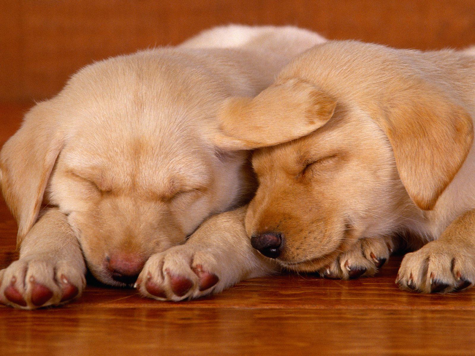 http://2.bp.blogspot.com/-8ZOe9NmZSUw/TqY5eFIC4KI/AAAAAAAABw8/G1-8HevXW1k/s1600/dogs-high-resolution-wallpaper-10.jpg
