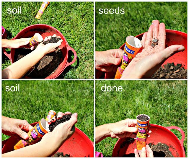 Seed Starter Steps