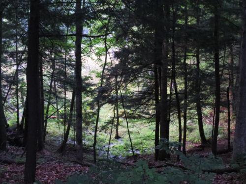 MacKenzie Pathway