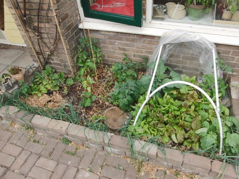 Mijn kleine moestuin tomaatjes en wat foto s van hoe de tuin nu is - Hoe amenager tuin ...