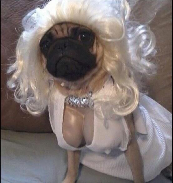 Marilyn Monroe Halloween Dog Costume